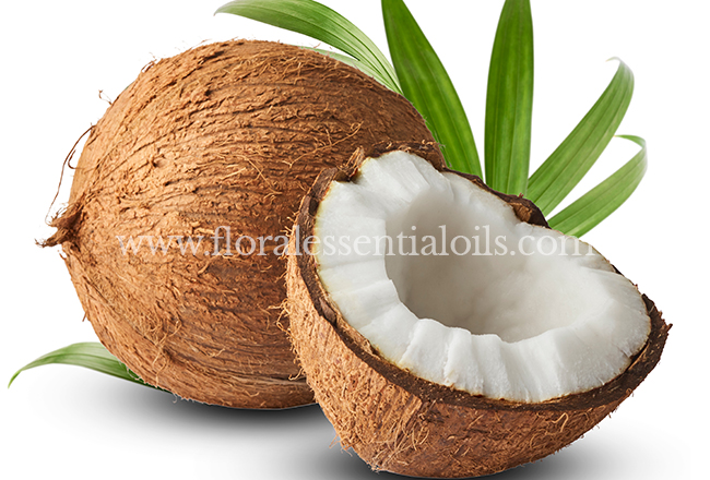 Coconut Fragrance Concentrate