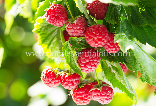 Raspberry Fragrance Concentrate