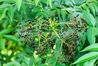 Black Pepper Essential Oils